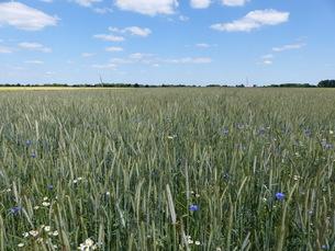 grass_fieldsの素材 [FYI00742689]