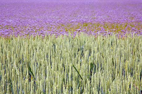 grass_fieldsの素材 [FYI00742702]