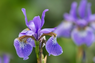 plants_flowersの素材 [FYI00742717]