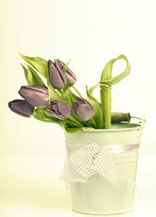 Vintage styled photo of purple tulips bouquetの写真素材 [FYI00742739]