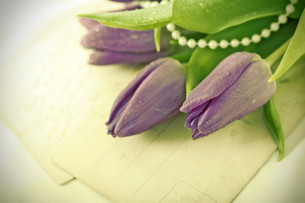 Old love letters and purple tulipsの素材 [FYI00742741]