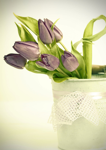 Vintage styled photo of purple tulips bouquetの写真素材 [FYI00742742]