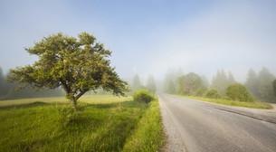 Rural road in morning fogの写真素材 [FYI00742778]