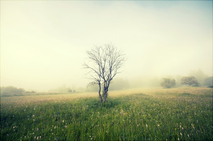 Vintage photo of summer field in the morning fogの写真素材 [FYI00742779]