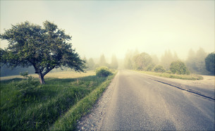 Rural road in morning fogの写真素材 [FYI00742794]