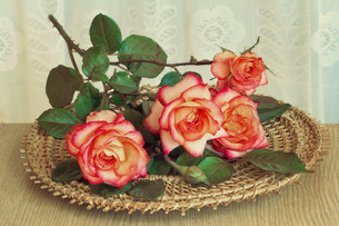 The roses on the table on a wicker platter.の写真素材 [FYI00742903]