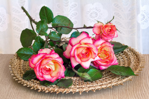 The roses on the table on a wicker platter.の写真素材 [FYI00742948]