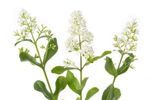 plants_flowersの素材 [FYI00742955]