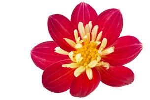 plants_flowersの素材 [FYI00742972]