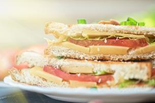 Cheese sandwichの写真素材 [FYI00742989]