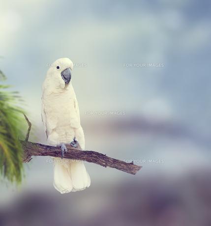 birdsの写真素材 [FYI00743286]