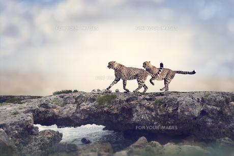 animalsの写真素材 [FYI00743298]