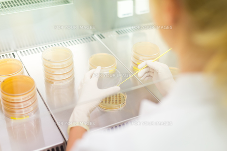 Life science researcher grafting bacteria.の写真素材 [FYI00743493]
