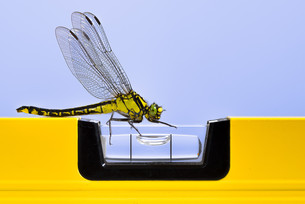 dragonfly (western clubtail) attracted by a yellow spirit levelの写真素材 [FYI00743899]