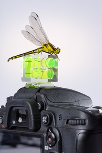 dragonfly attracted by the spirit level on a modern dslr cameraの写真素材 [FYI00743900]