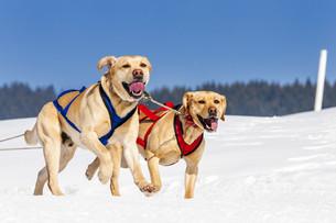 sportive dogsの素材 [FYI00744039]