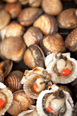 Shellsの素材 [FYI00744164]
