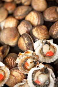 Shellsの写真素材 [FYI00744164]