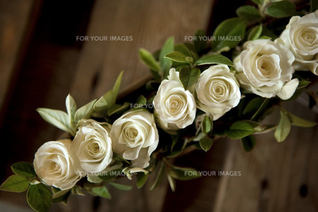 Rosesの写真素材 [FYI00744167]