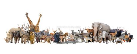 animal of the worldの写真素材 [FYI00744524]