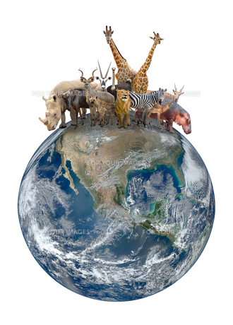 group of africa animal with planet earthの写真素材 [FYI00744548]