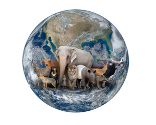 group of asia animal with planet earthの写真素材 [FYI00744551]