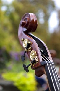 Bassの素材 [FYI00745276]