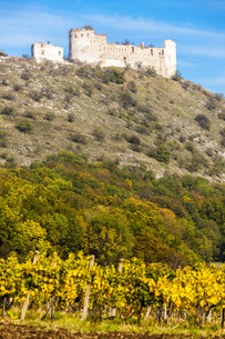 ruins of Falkenstein Castle with vineyard in autumn, Lower Austria, Austriaの写真素材 [FYI00746032]