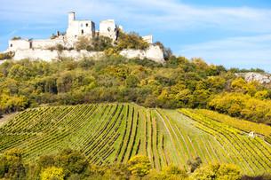 ruins of Falkenstein Castle with vineyard in autumn, Lower Austria, Austriaの写真素材 [FYI00746035]