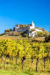 ruins of Falkenstein Castle with vineyard in autumn, Lower Austria, Austriaの写真素材 [FYI00746038]