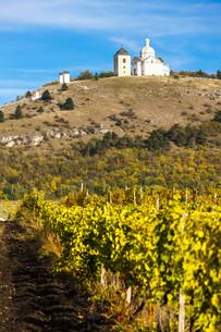 Calvary of Mikulov with autumnal vineyard, Czech Republicの写真素材 [FYI00746044]