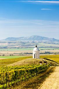 chapel with vineyard near Velke Bilovice, Czech Republicの写真素材 [FYI00746045]