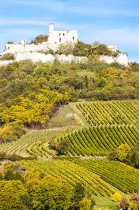 ruins of Falkenstein Castle with vineyard in autumn, Lower Austria, Austriaの写真素材 [FYI00746051]