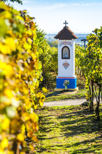 God''s torture with vineyard near Nechory, Czech Republicの写真素材 [FYI00746065]