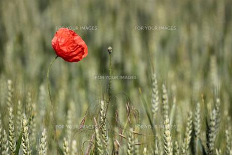 grass_fieldsの素材 [FYI00746068]