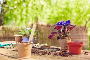 Gardeningの素材 [FYI00746124]