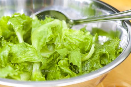 lettuce in bowlの写真素材 [FYI00746128]