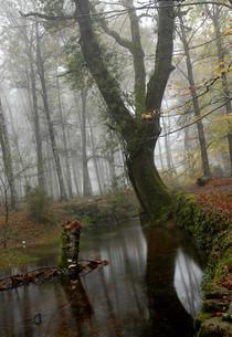 forestの素材 [FYI00746217]