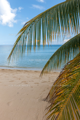 Beach on tropical island. Clear blue water, sand, clouds.の写真素材 [FYI00746474]