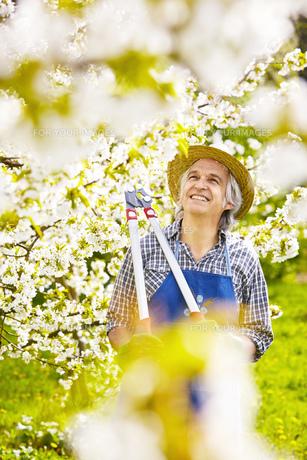 gardener lopper cherry cherryの素材 [FYI00746706]