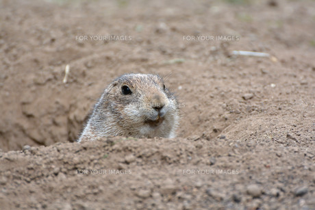 mammalsの写真素材 [FYI00747125]