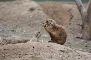 mammalsの写真素材 [FYI00747139]