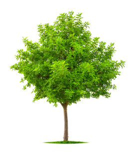 trees_forestsの素材 [FYI00747335]
