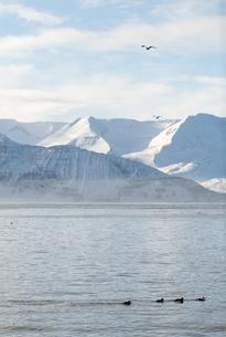 Skjalfandi Bay in Icelandの素材 [FYI00748091]