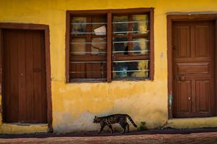 Yellow Traditional Turkish Houseの写真素材 [FYI00748136]