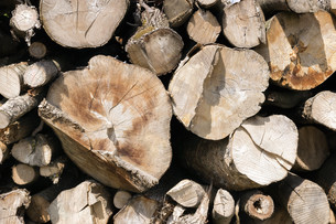 Stacked and chopped tree trunksの写真素材 [FYI00748491]