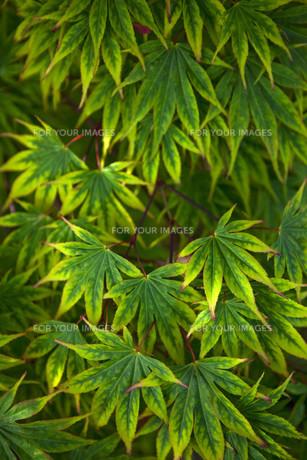 Vegetable backgroundの写真素材 [FYI00748501]