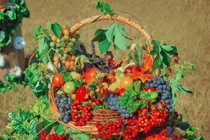 Harvest vegetables, fruits, berries sold at the fairの写真素材 [FYI00748565]