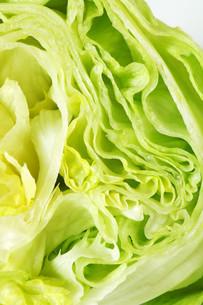 Iceberg lettuceの写真素材 [FYI00748731]