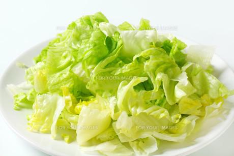 Iceberg lettuce saladの写真素材 [FYI00748739]